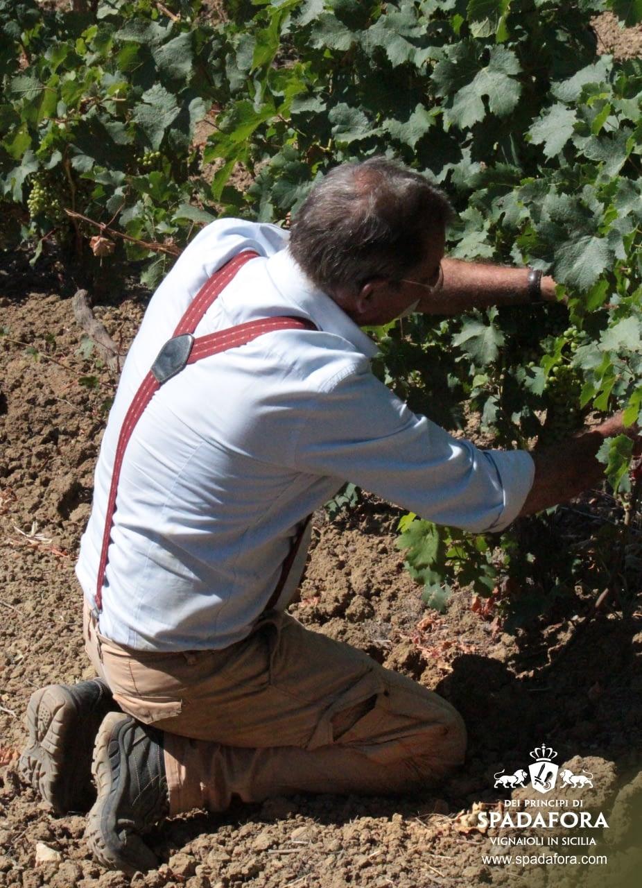 coltivazione-vigneto-in-agricoltura-sostenibile